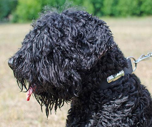 collier pour chien personnalisable en nylon sans pareil c42. Black Bedroom Furniture Sets. Home Design Ideas