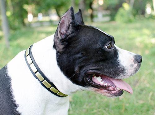 Collier fantaisie pour chien luxe en coloris noir s25 - Collier pour chien original ...