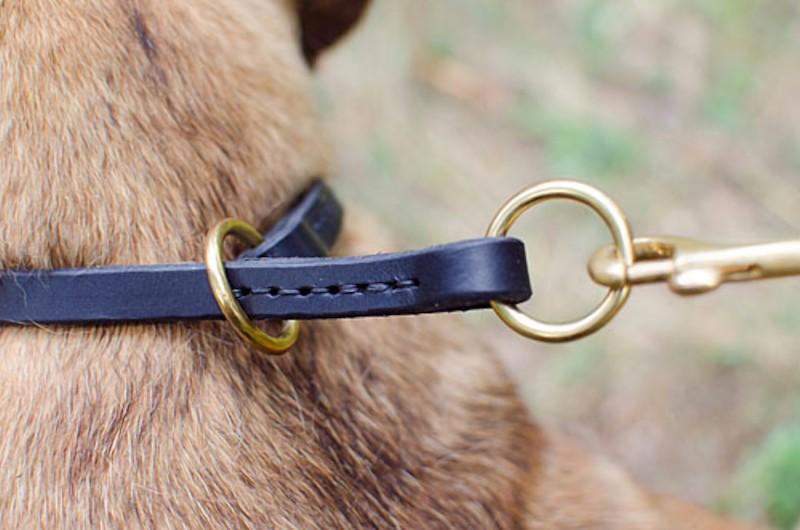 collier de dressage sagesse pour chien cane corso c9513. Black Bedroom Furniture Sets. Home Design Ideas