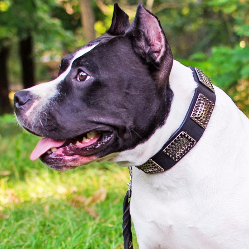 Collier original pour chien amstaff style rococo c89n - Collier pour chien original ...